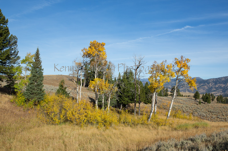 Blacktail Rd Fall Color-2065