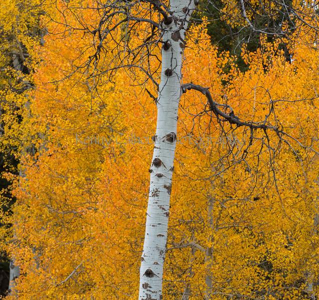 Antelope Flats Fall color-1512