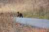 Wilson Rd Bears-3851