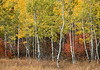 Teton Color-3605