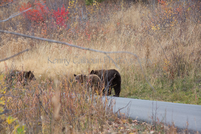 Wilson Rd Bears-3844