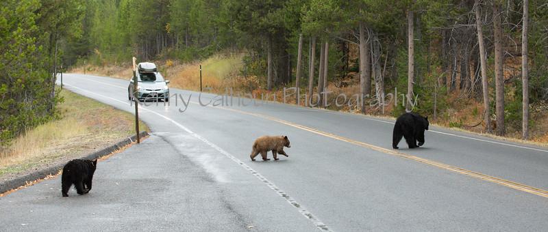 Teton Lake Bears-4073