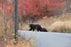 Wilson Rd Bears-3868
