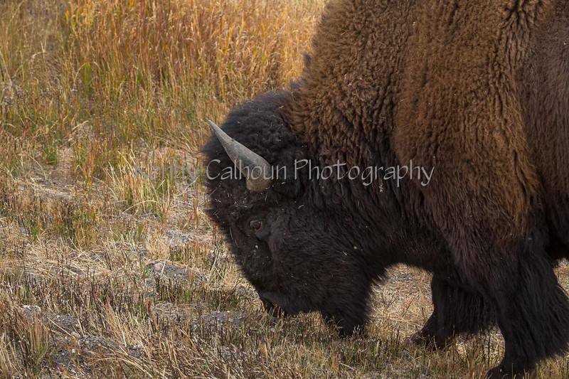 Junction Buffalo--2