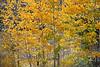 Neighborhood Fall color-1780