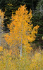 Antelope Flats Fall color-1495