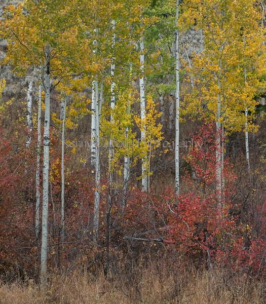 Teton Color-