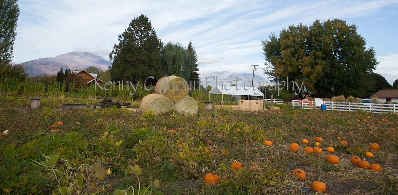 Meadowlark Pumpkin Farm-2265