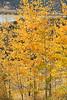 Neighborhood Fall color-1777