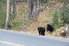 Teton Lake Bears-4099