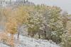 Lakeview Aspen Snow-9466