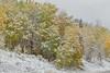 Lakeview Aspen Snow-9462