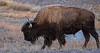 Firehole Ice Buffalo-