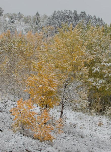 Lakeview Aspen Snow-9468
