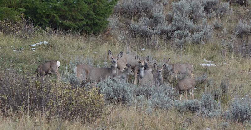 Cabin Deer-0102