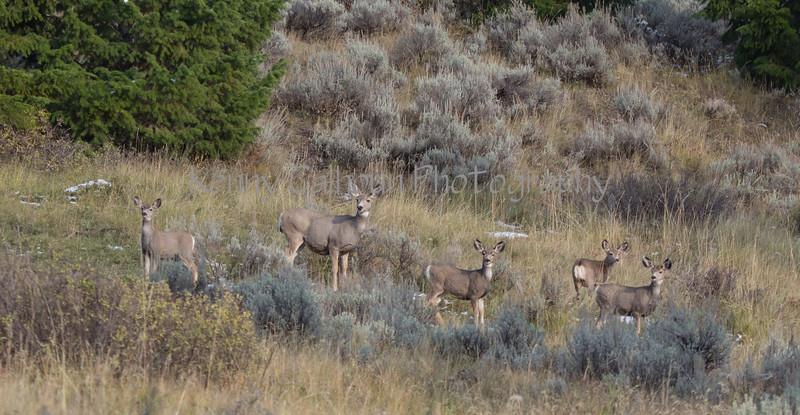 Cabin Deer-0082