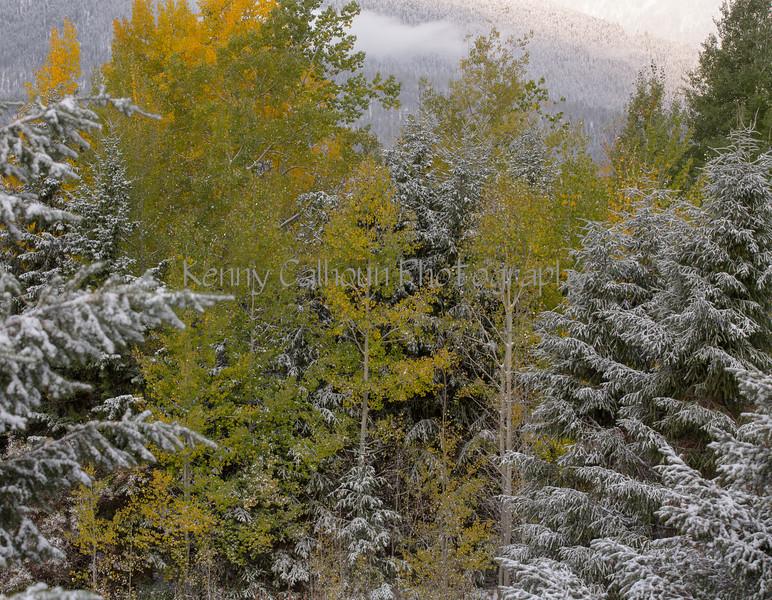 Cabin Snow-8220