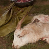Slaughtered goat.