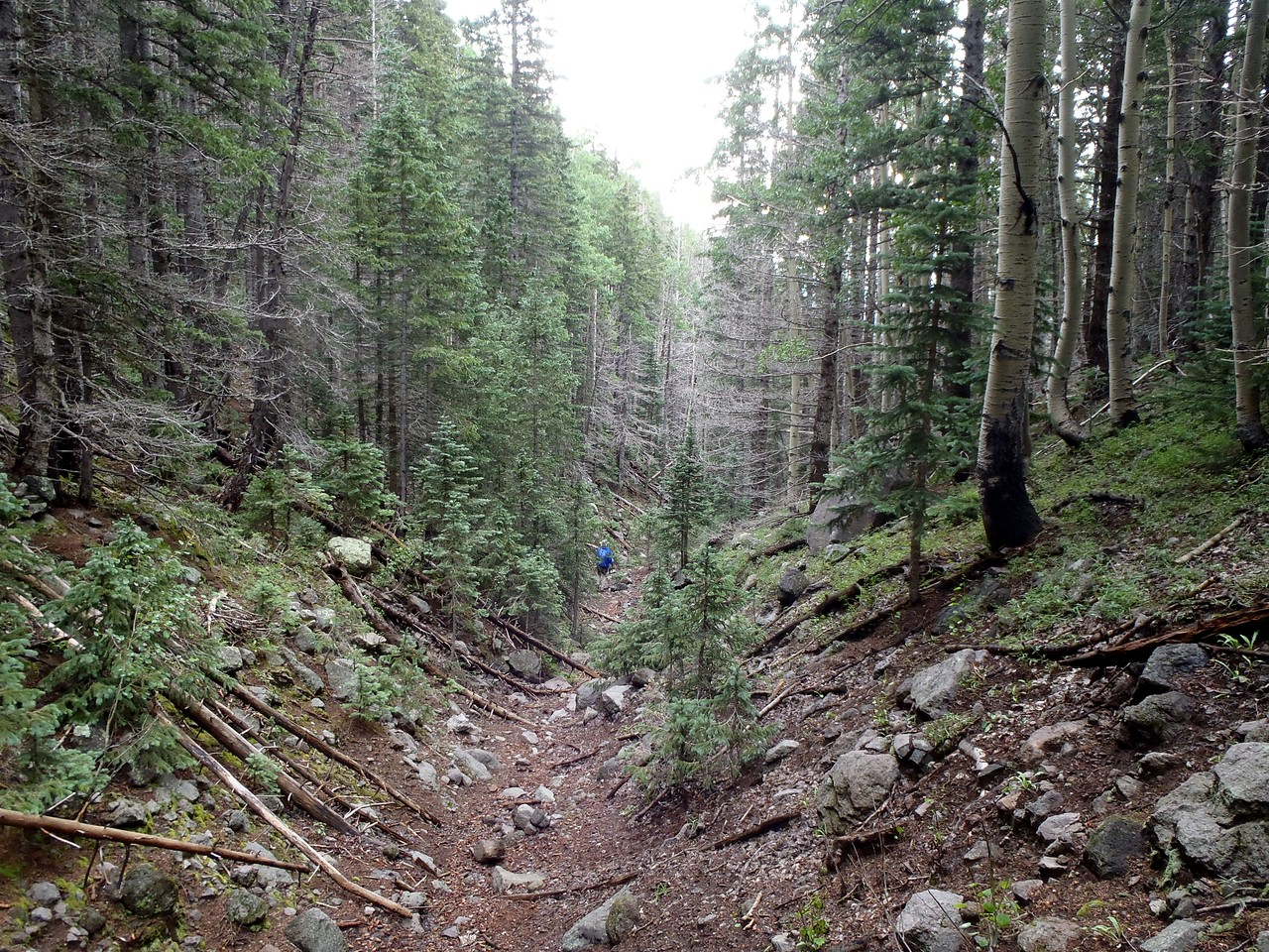 The hike up Bear Jaw Canyon started out with a gentle slope up, but soon progressed very steeply.