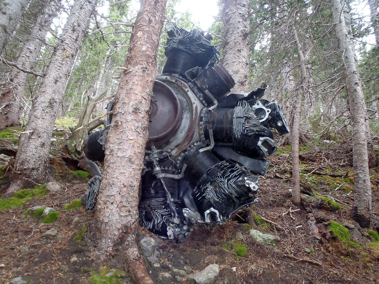 "This Wright R-1820 ""Cyclone"" Radial Engine tumbled a good thousand feet down the canyon and wedged itself between two Aspen Trees."