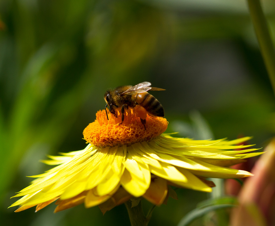 Bee collecting the honey....