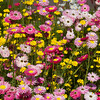 Paper daisy garden