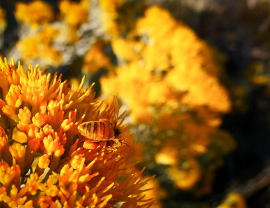 2020-10-16 – Bees busy at work as the sun sets