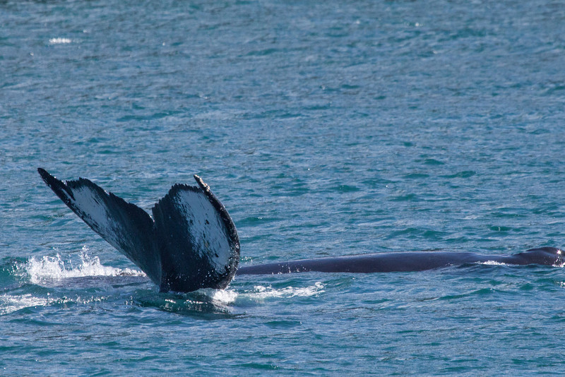 Whale flukes.