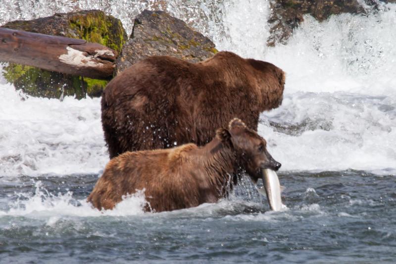 Fishing success at the Falls.