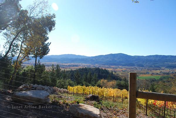 Auberge Road Vineyard