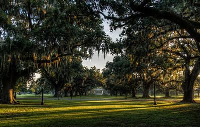 audubon-park-trees-4-8