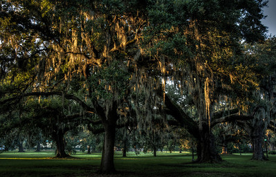 audubon-park-mossy-trees-2-6