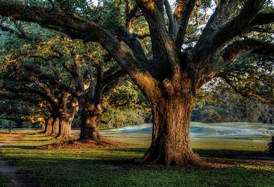 audubon-park-trees-2-3