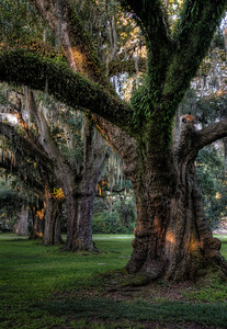 audubon-park-mossy-trees-3-7
