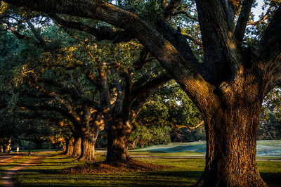 audubon-park-trees-3-4