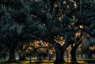 audubon-park-mossy-trees-5