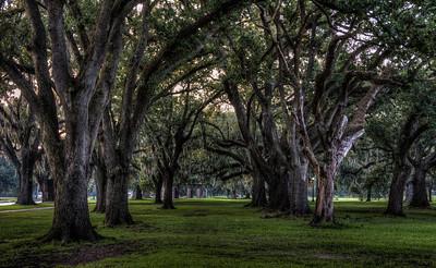 park-trees-1