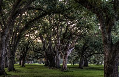 audubon-park-trees-2