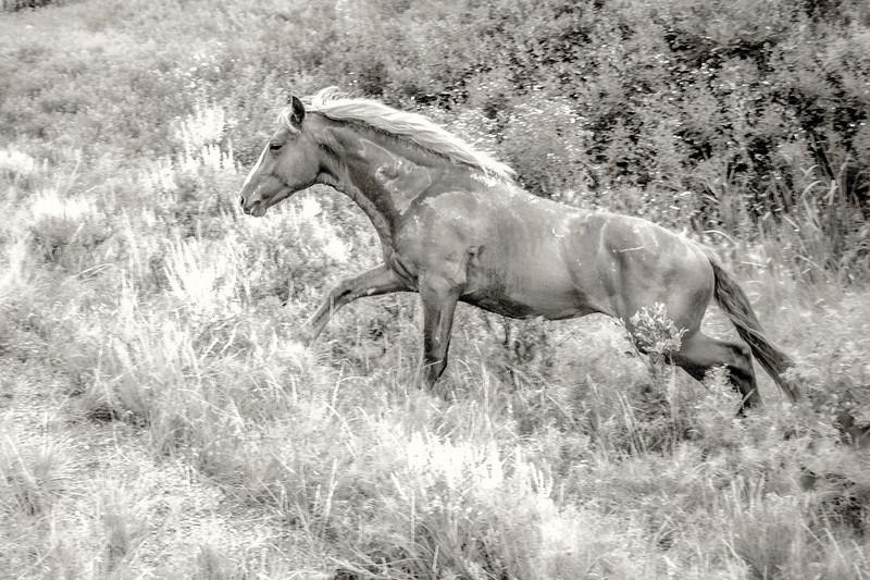 Connecticut, a wild horse