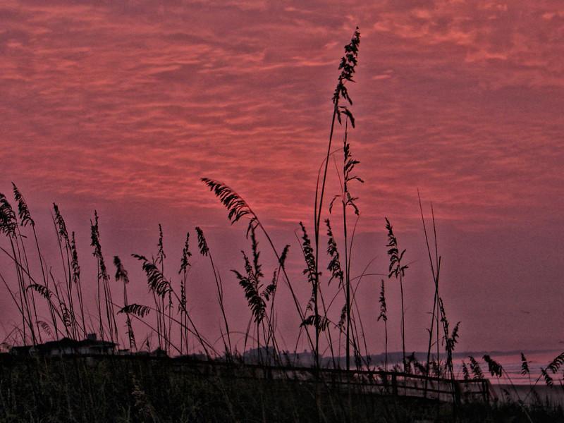 Sunrise through the sea oats on Kiawah Island beach