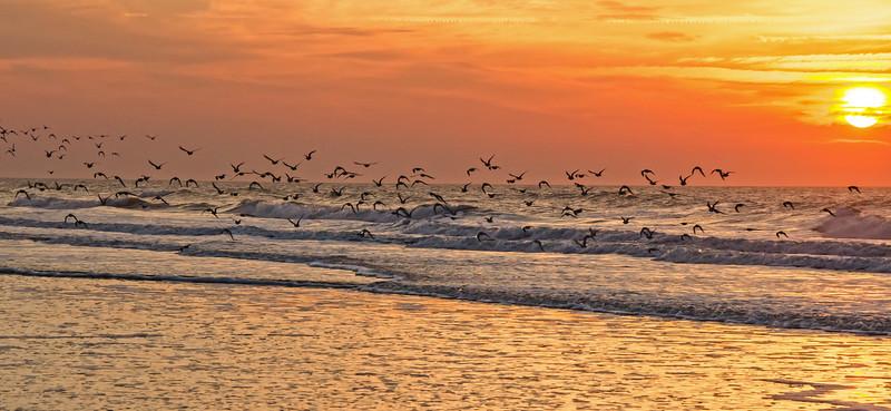 Migrating birds at sunrise on Kiawah Island beach.