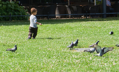 Chasing pigeons in park