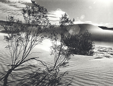 Desert Bush and Sand