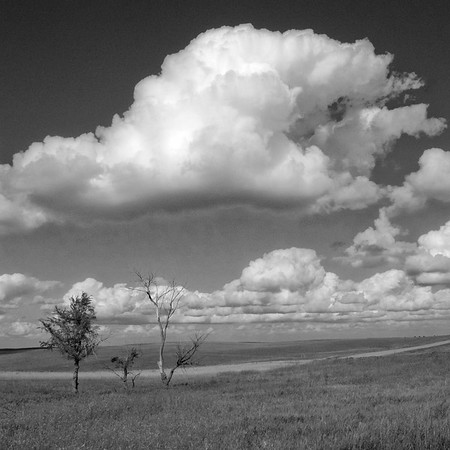 Trees with Cloud, bxw While the colorful rendition of this scene presented the bright coloration of the grass,sky,and clouds, perhaps this black and white version emphasizes more fully the stark vastness of the grasslands, the lonesome look of the weathered trees, and the crowning majesty of the clouds above.  Western North Dakota.   Beautiful!