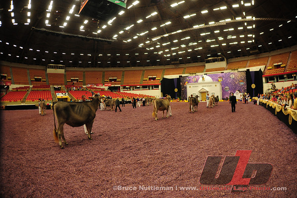 2013 World Dairy Expo