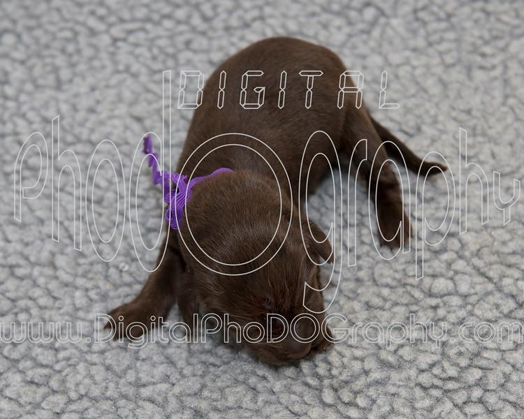 8130710