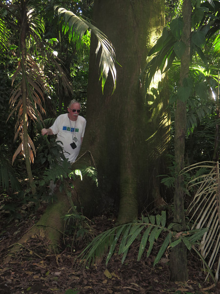 Arenal Nationa Park, La Fortuna, San Carlos, Alajuela, Costa Rica<br /> Picture by Susan Sharp 2/13/2014