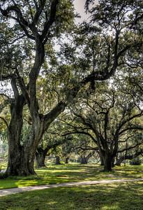 park-oak-trees-2-1
