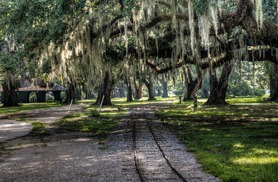mossy-trees-railroad-tracks-1