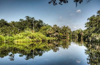 bayou-swamp-1